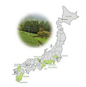 matcha growing regions in Japan